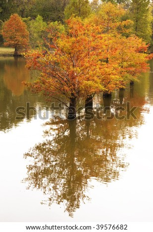 A beautiful inspirational scene of Autumn Cypress Trees reflecting in the water, a wonderful fishing area in Tennessee,vertical, copy space - stock photo