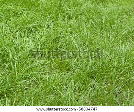 A beautiful lawn of green grass - stock photo