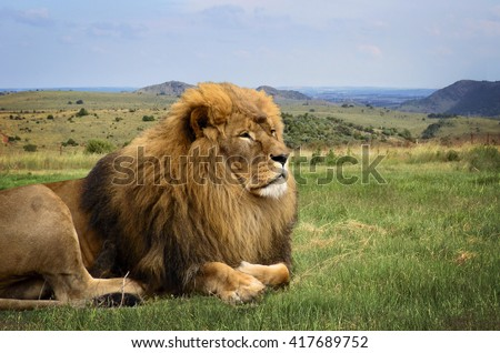 A beautiful lion is resting in African expanse on the background of hills on the horizon. Close up. - stock photo