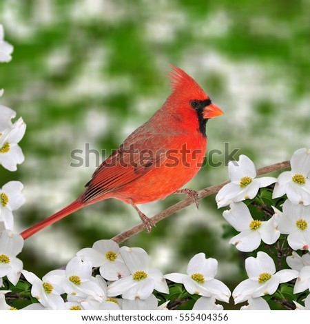 Dogwood Stock Images, Royalty-Free Images & Vectors | Shutterstock