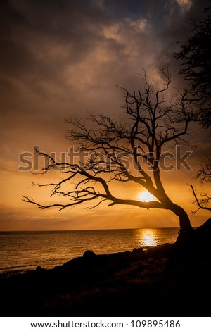 A beautiful ocean sunset silhouettes a bare tree