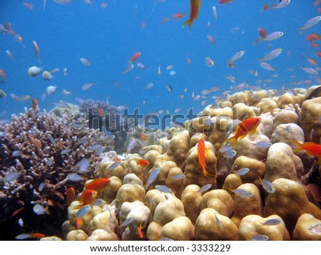 A beautiful picture of a coral reef teeming with life. shot in the Red Sea - stock photo