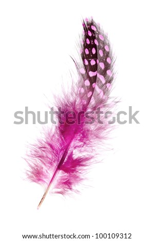 A beautiful pink dyed guinea feather isolated on white background