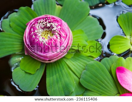 A beautiful pink lotus flower in pond - stock photo