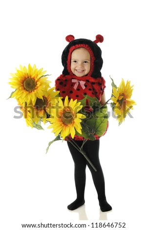 "A beautiful preschool ""ladybug"" happily holding a bunch of big, bright, yellow sunflowers.  On a white background. - stock photo"