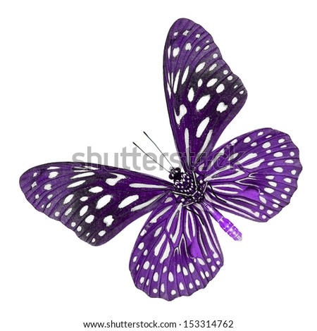 A beautiful purple butterfly isolate on white background.