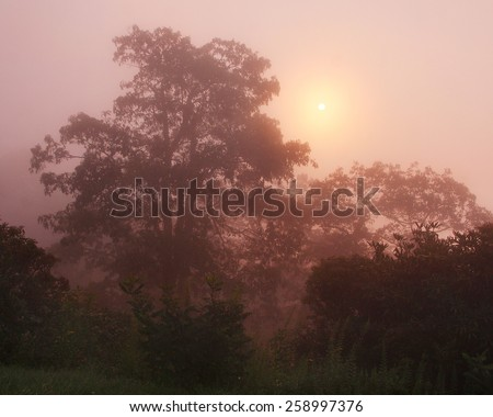 A beautiful scenic foggy sunrise on the Blue Ridge Parkway in Western North Carolina. - stock photo