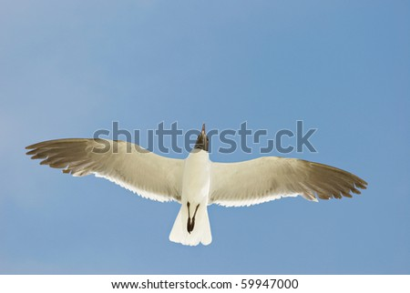 A beautiful Seagull with a blue sky background - stock photo