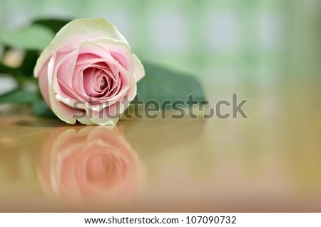 A Beautiful Single Pink Rose with a Shallow Depth of Field (DOF) Lying on a Wooden Table with a Reflection underneath - stock photo