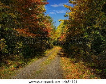A beautiful small road in autumn. - stock photo