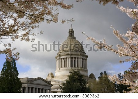 A beautiful spring day at the Washington State Capitol building with cherry trees blossoming