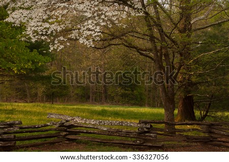 A beautiful spring Dogwood tree flowers on the edge of a meadow lined with an old rustic fence in Tennessee - stock photo