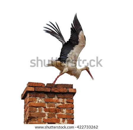 A beautiful stork in flight. Start in flight with smoke of pipes on the roof of the house in Banja, Bulgaria, isolated on white background