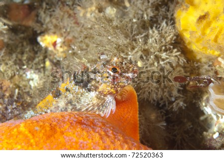 A beautiful underwater reef fish rests on top of an orange starfish