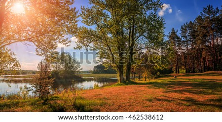 A beautiful view by the lake  in forest during sunset in autumn evening. majestic sunset. Fantastic river with fresh grass in the sunlight. wonderful sunny landscape. unusual picturesque scene.