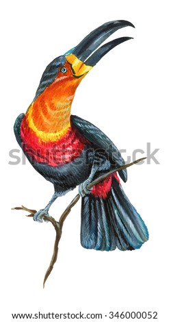 a beautiful watercolor illustration of a toucan bird. A large tropical exotic bird, with colorful beak, sitting of a branch. Very detailed hand drawn illustration. - stock photo