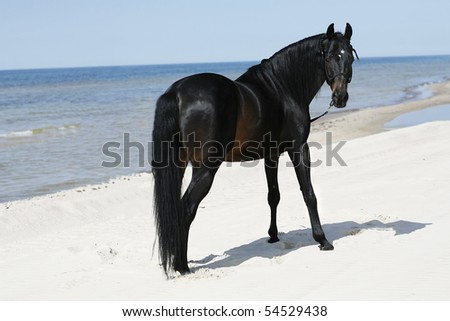 A beautyful stallion standing freely on the beach - stock photo