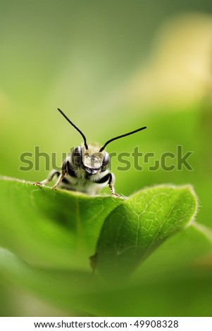 A bee - stock photo