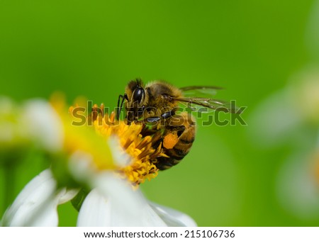 A bee collecting nectar from wild grass flower.