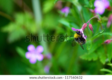 A bee feeding from a pretty flower - stock photo