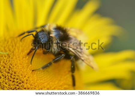 A bee on a yellow flower 1