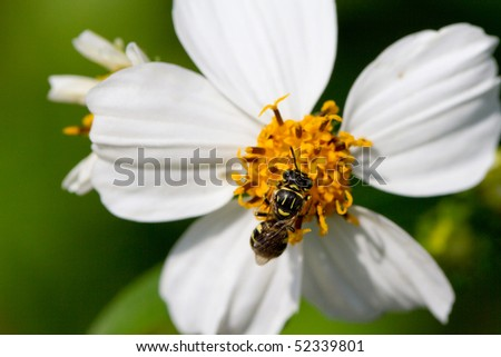 A bee on the flower - stock photo