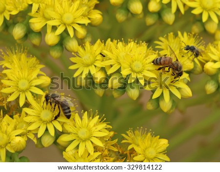 a bee on yellow flowers with a background blur - stock photo