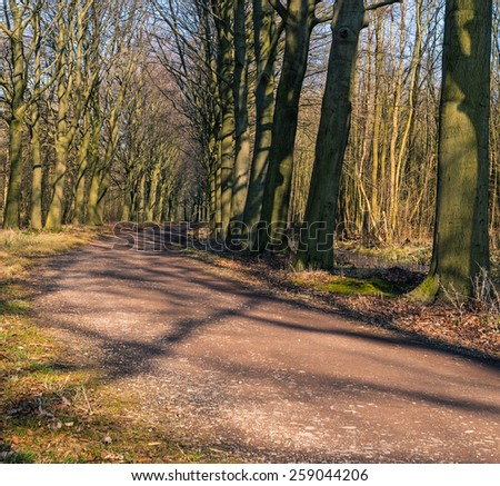 A Beech tree lane in the Horsten, Netherlands.