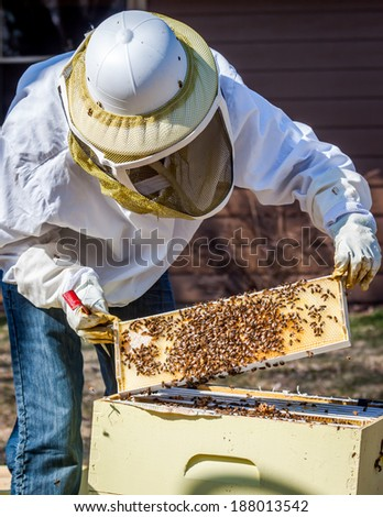 A beekeeper inspects a frame she's pulled out of the hive