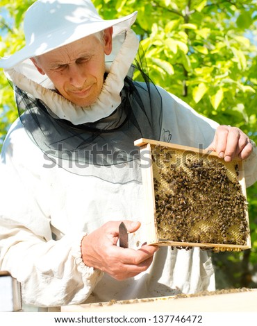 A beekeeper inspects hives. Frame with bees.