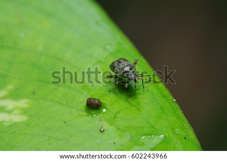 A beetle on a leaf while looking at the camera.