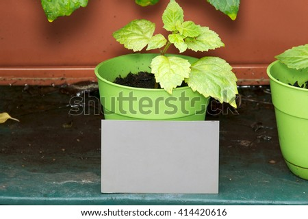 A behind the scenes look at a grey card positioned to help with exposure and white balance, Grey card is in front of potted plant in garden. - stock photo