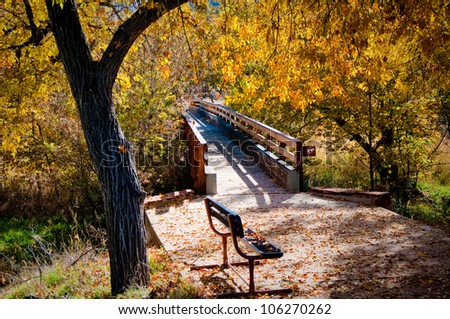 A bench sitting underneath a maple tree in Autumn