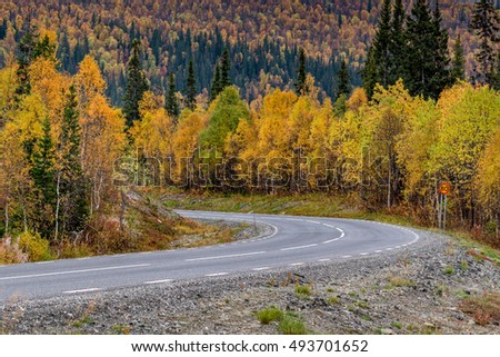 A bend in a road in to the forest in Scandinavia in autumn