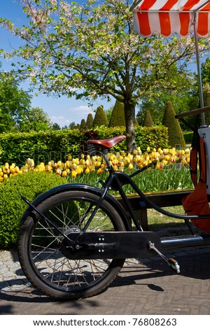 a bicycle in holland near colored tulip