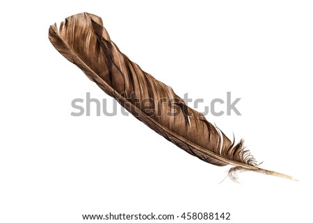 a big bird feather isolated over a white background