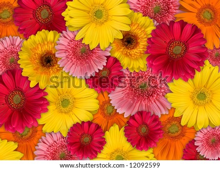 A Big Bunch of Gerbera - stock photo