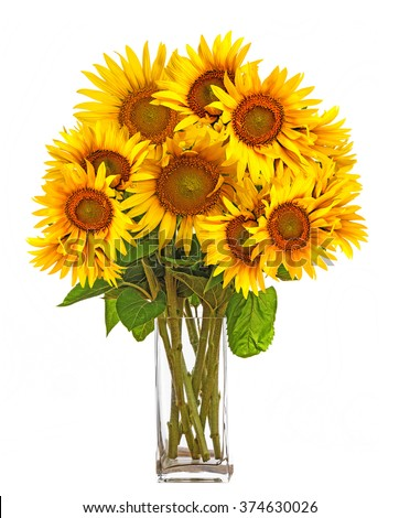 a big bunch of sunflowers in a vase - stock photo