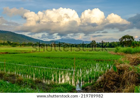 A big cloud and rice fields in the morning