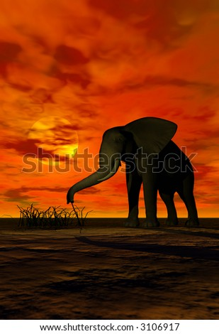 A big elephant grazing on grass under the sunset - stock photo