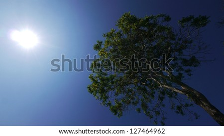 A Big Tree in a Sunshine Day. - stock photo