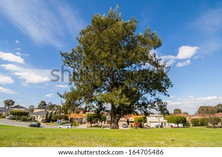 A big tree with blue sky at Bentley, Perth, Western Australia - stock photo