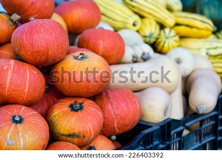 A bin filled with Red Kuri Squash at a Fall farmer's market in San Francisco. Butternut and delicate in the background. - stock photo