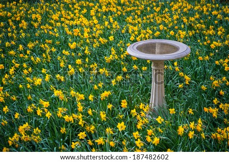 A Bird Bath Surrounded By A Spring Garden Of Daffodils.