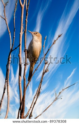 A bird clinging on a tree on blue sky background