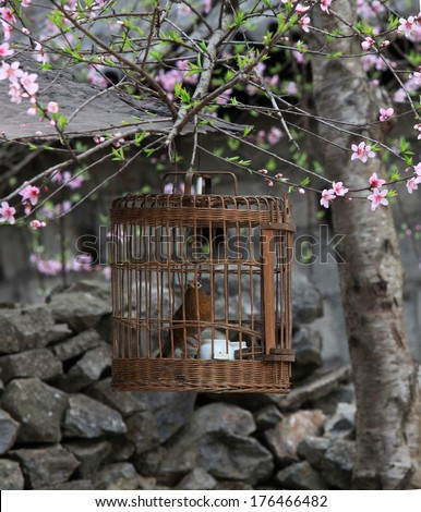 A bird held in a cage under cherry tree - stock photo