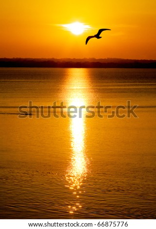 A bird is silhouetted against a colorful orange sky. - stock photo