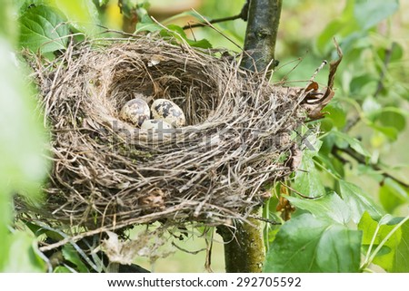 bird's nest with three eggs in a tree in the garden - stock photo