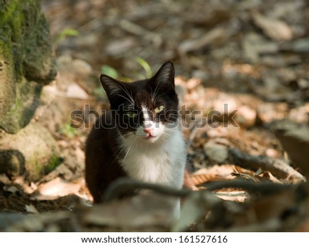 A black and white cat sitting among the fallen leaves. - stock photo