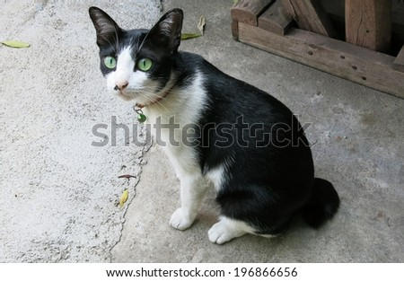 A black and white cat  sitting outside - stock photo